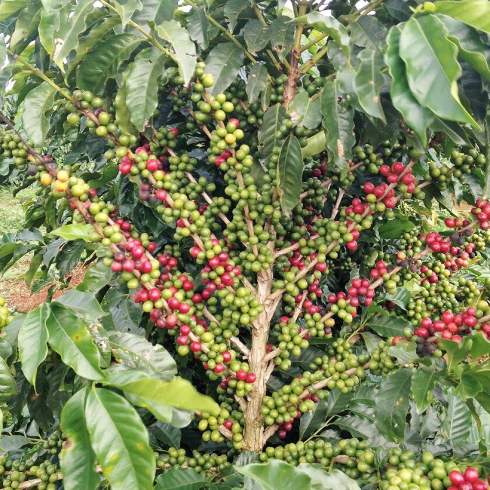 Coffee212